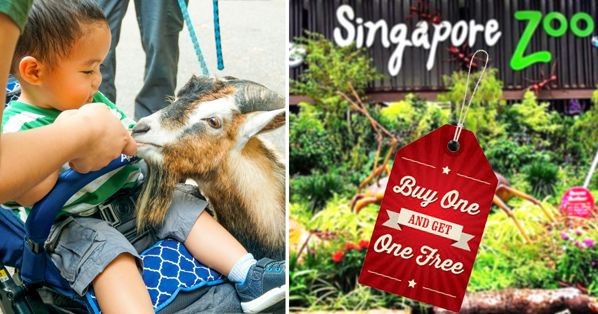 1-For-1 Admission for Singapore residents to the Singapore zoo, Bird Park, Night Safari and River Safari