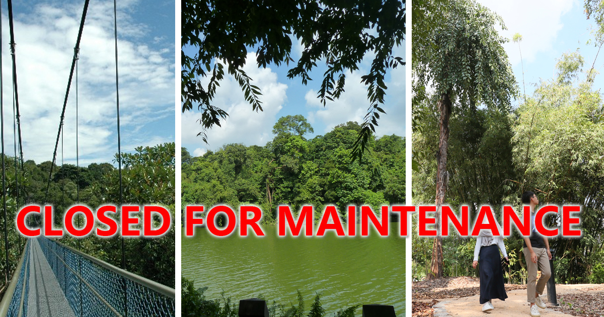 NPark closes the MacRitchie TreeTop Walk, Peirce Track and part of Petaling Boardwalk for maintenance, until May 2021